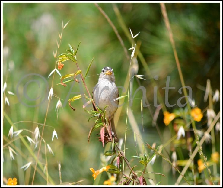 Bird_Archita_2