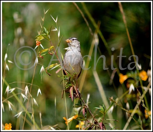 Bird_Archita