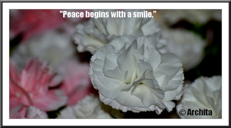 Quote for peace