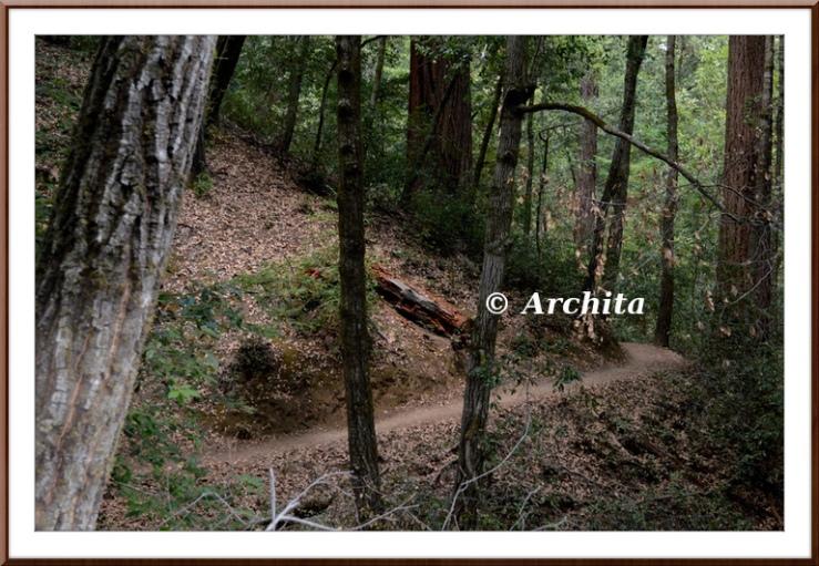 redwood17