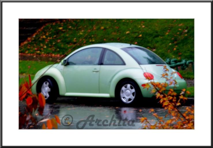autumn_car