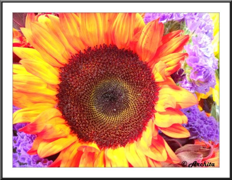 California sun 1