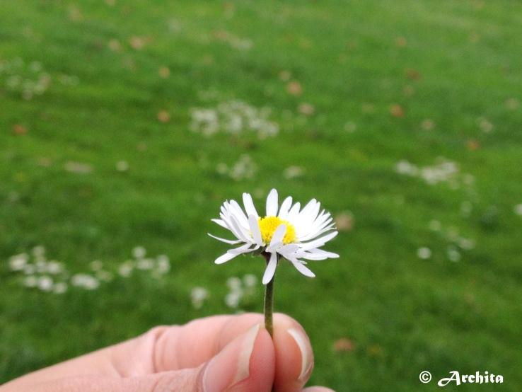 Spring1