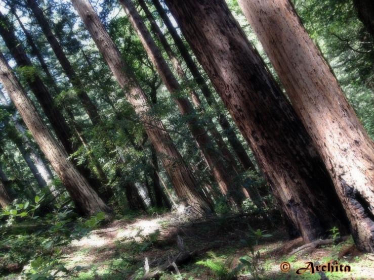 redwoods123