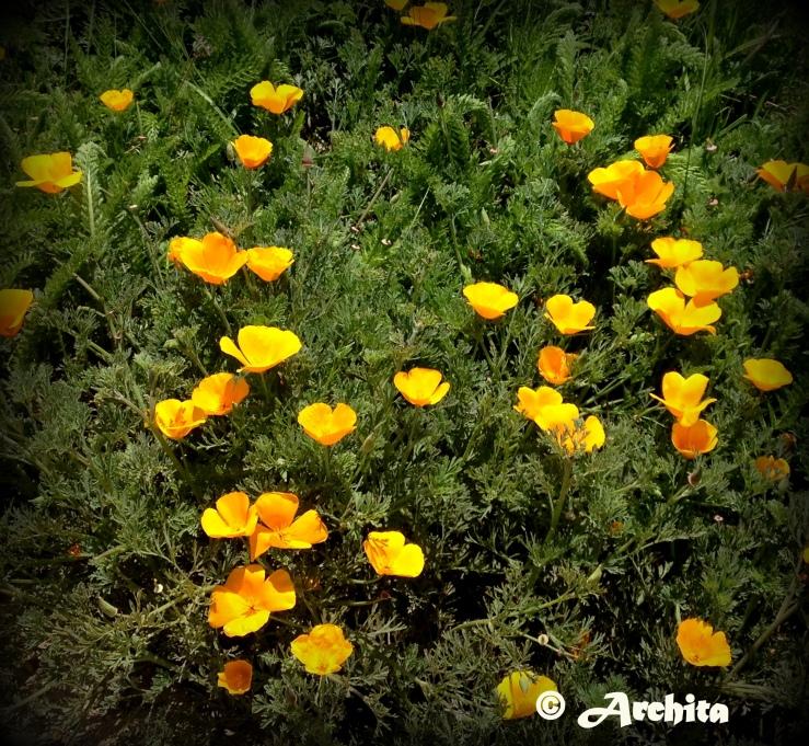 Spring 12