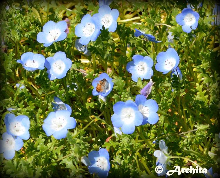 Spring 8