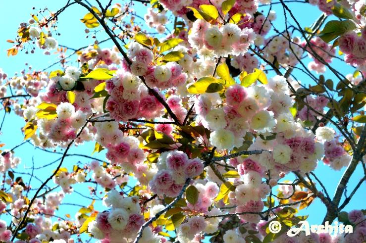 Spring 9