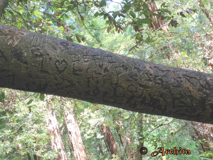 Redwoods fonts