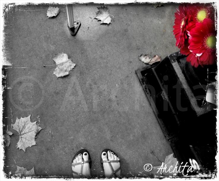 fall archita