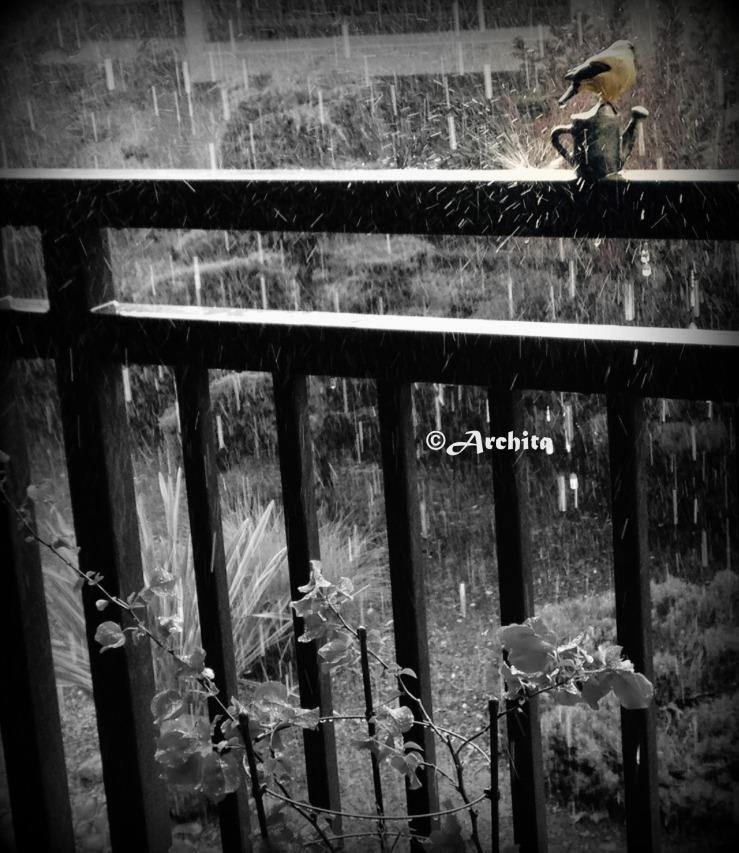 rain in cali