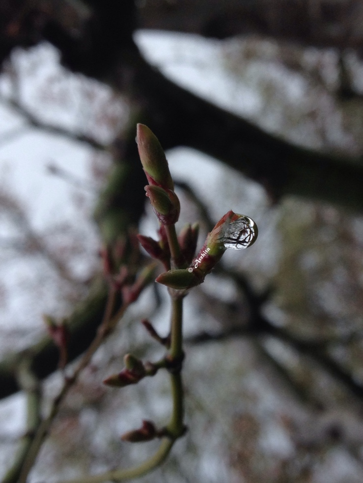 Spring in raindrops
