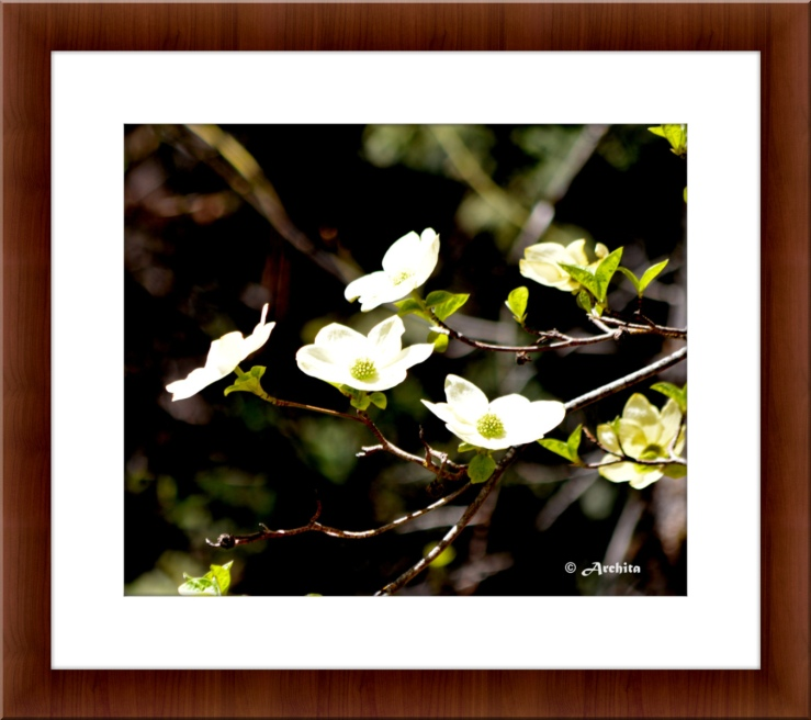 Yosemite spring wild flower