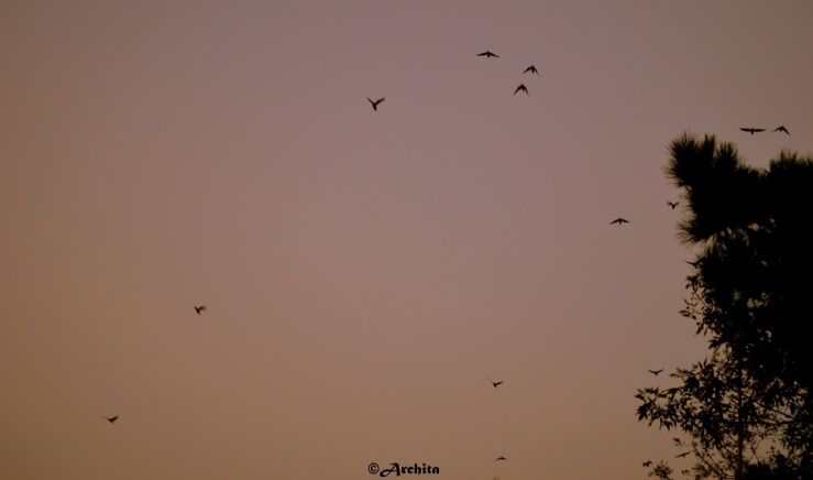 The flying sky of fall