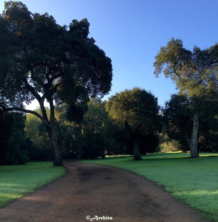 Green California in 2016