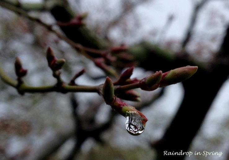 Raindrop in spring