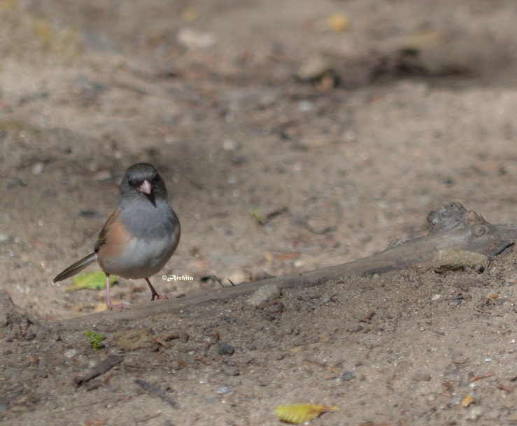 Bird in Pfeiffer