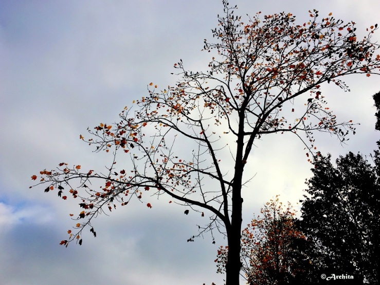 AN autumn tree on a rainy day.jpg